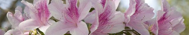 Цветы и растения_38