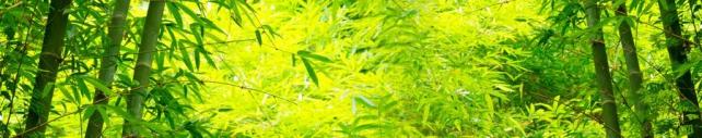Цветы и растения_415