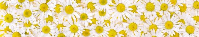 Цветы и растения_41