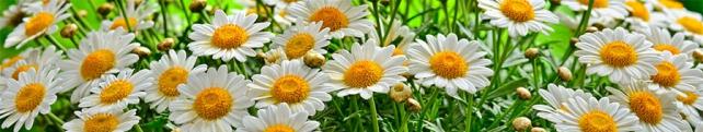 Цветы и растения_43