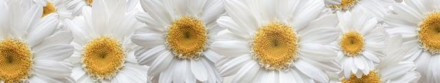Цветы и растения_45