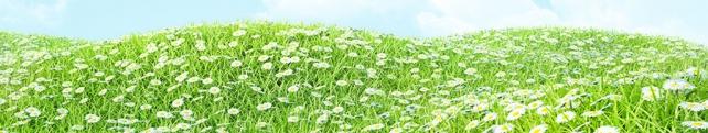 Цветы и растения_46