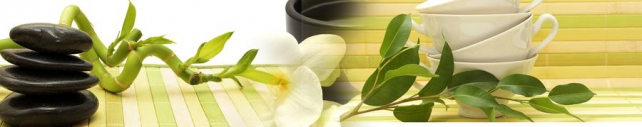 Цветы и растения_471
