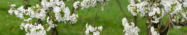 Цветы и растения_47