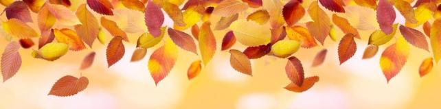 Цветы и растения_482