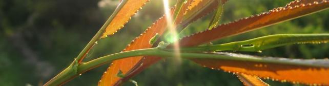 Цветы и растения_487