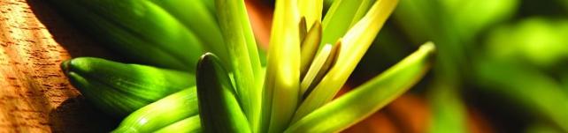 Цветы и растения_489