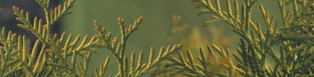 Цветы и растения_495