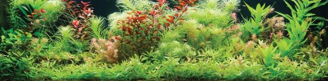 Цветы и растения_499