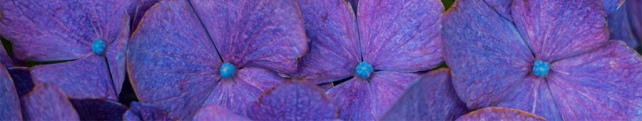 Цветы и растения_4