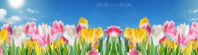 Цветы и растения_51