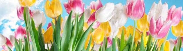 Цветы и растения_52