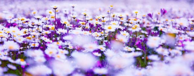Цветы и растения_559