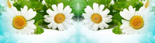 Цветы и растения_560