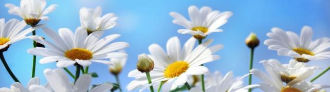 Цветы и растения_563