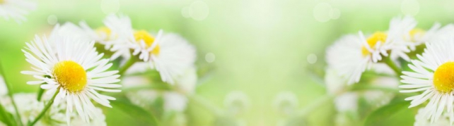 Цветы и растения_566