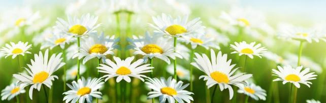 Цветы и растения_567