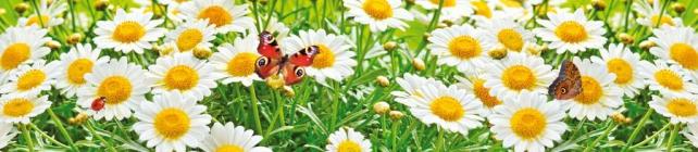 Цветы и растения_568