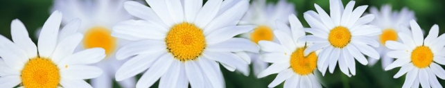 Цветы и растения_569