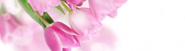 Цветы и растения_56
