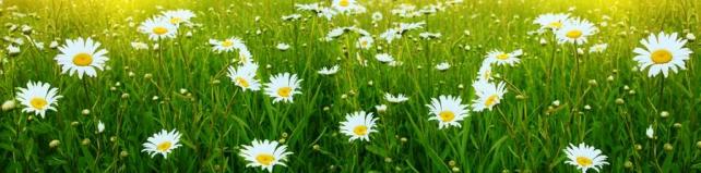 Цветы и растения_572