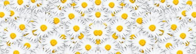 Цветы и растения_578