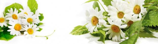 Цветы и растения_579