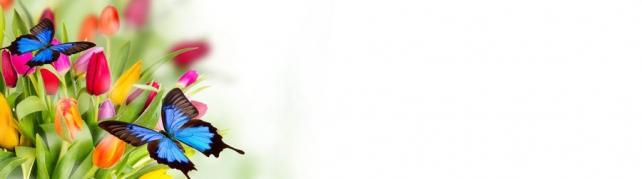 Цветы и растения_57