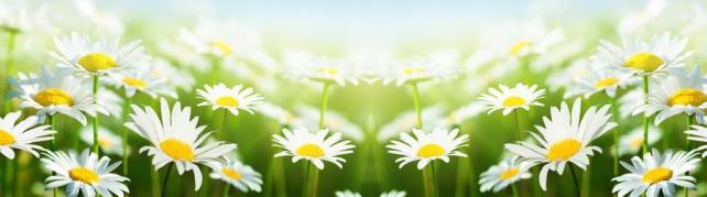 Цветы и растения_580