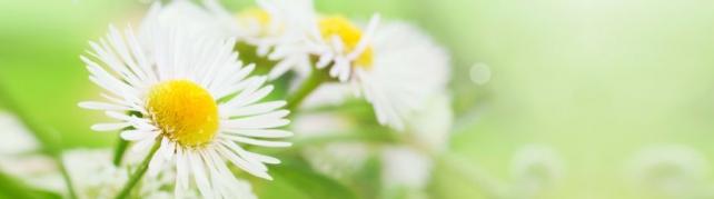 Цветы и растения_582