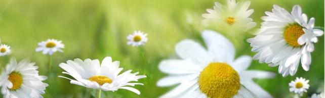 Цветы и растения_588