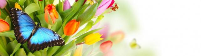 Цветы и растения_58