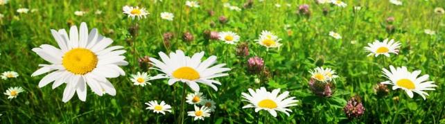 Цветы и растения_591