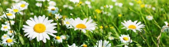 Цветы и растения_592