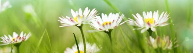 Цветы и растения_593