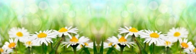 Цветы и растения_594