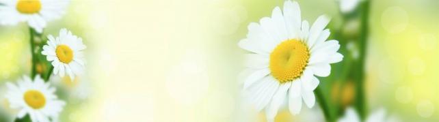 Цветы и растения_599