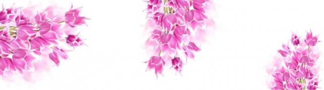 Цветы и растения_59