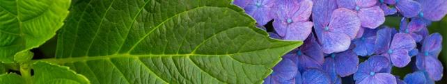 Цветы и растения_5