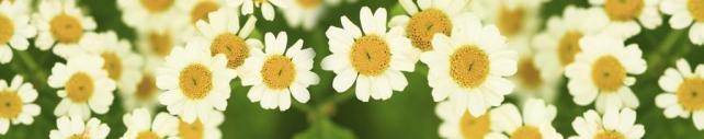 Цветы и растения_600