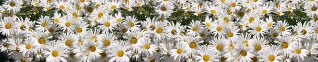 Цветы и растения_603