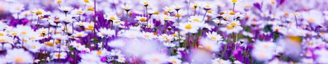 Цветы и растения_606
