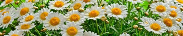 Цветы и растения_607