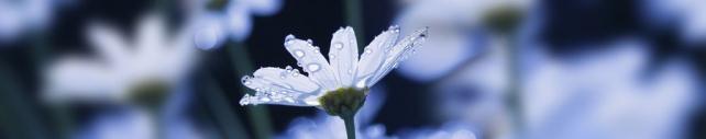 Цветы и растения_608