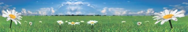 Цветы и растения_609
