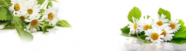 Цветы и растения_611