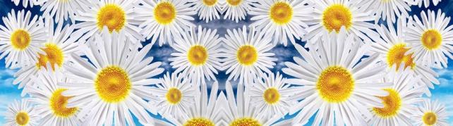 Цветы и растения_613