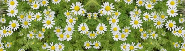 Цветы и растения_614
