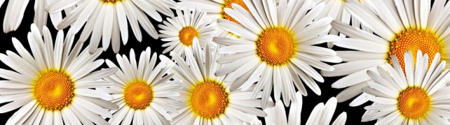 Цветы и растения_615