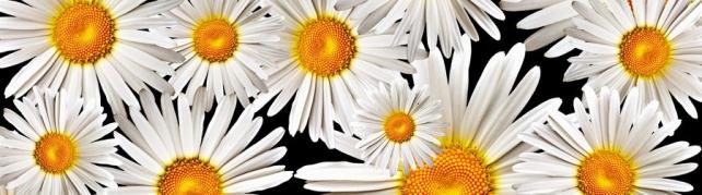 Цветы и растения_616